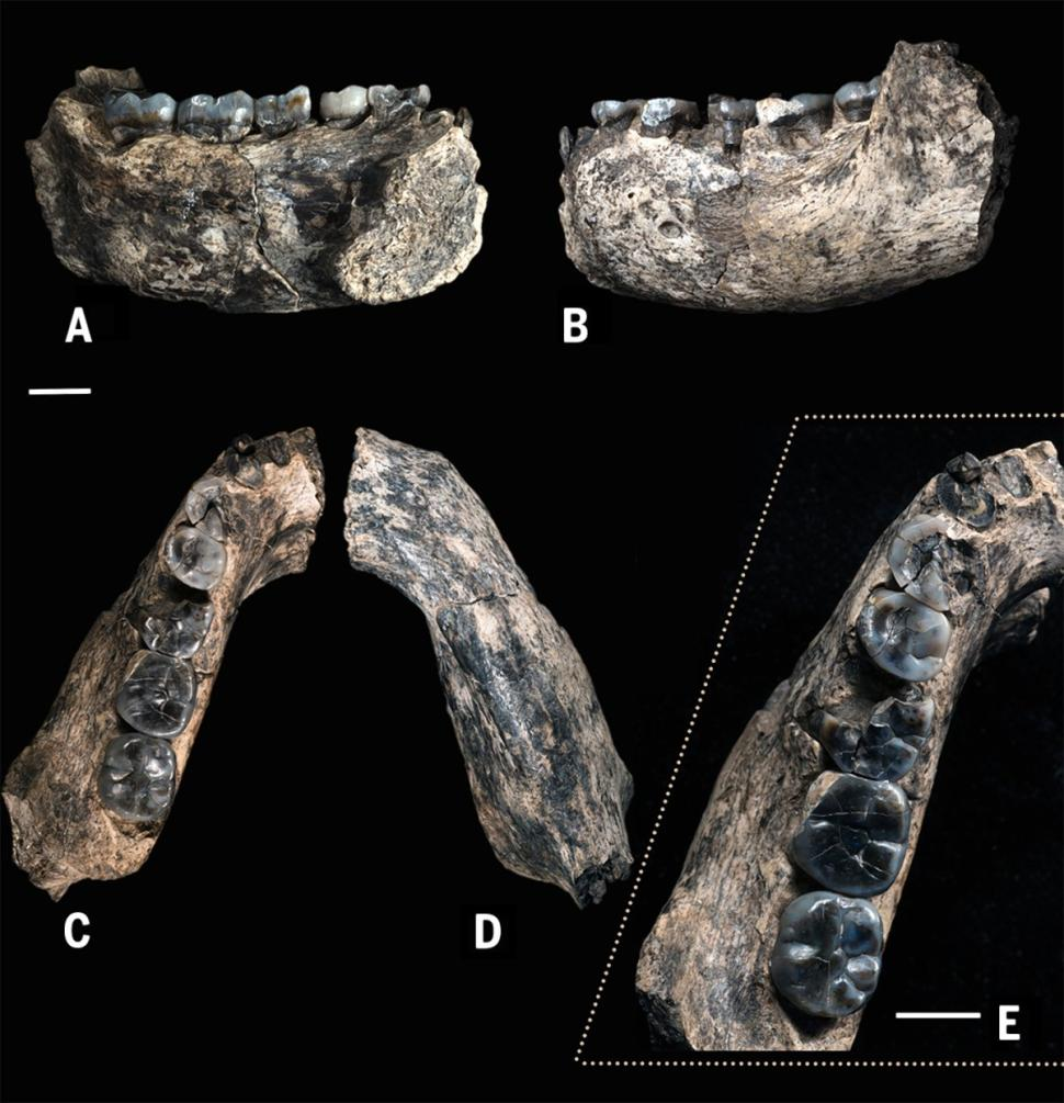 fossil-jaw
