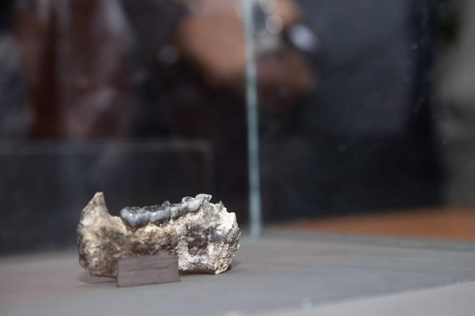 fossil-jaw2