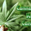 Watch Video As THC Destroys Cancer Cells
