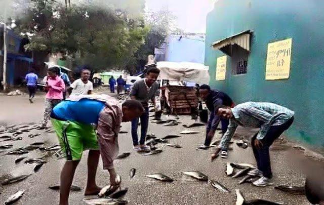 It Rained Fish In Dire Dawa City Ethiopia Rastafari