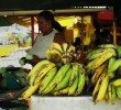 Organic Agriculture in Dominica