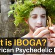 What is IBOGA? The African Psychedelic Drug