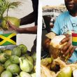 Ghana vs Jamaica! Visual Comparison - One People! Africans | Year of the Return